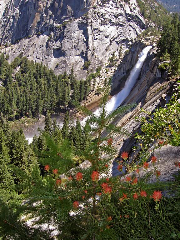 Nevada Falls and flowers,Yosemite