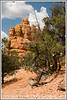 A picturesque gnarled trunk is in the foreground of a shot of rock formations in Red Canyon in Utah