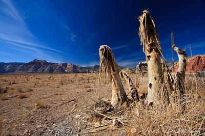 Martian Cacti