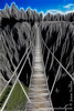 Tsingy Suspension Bridge