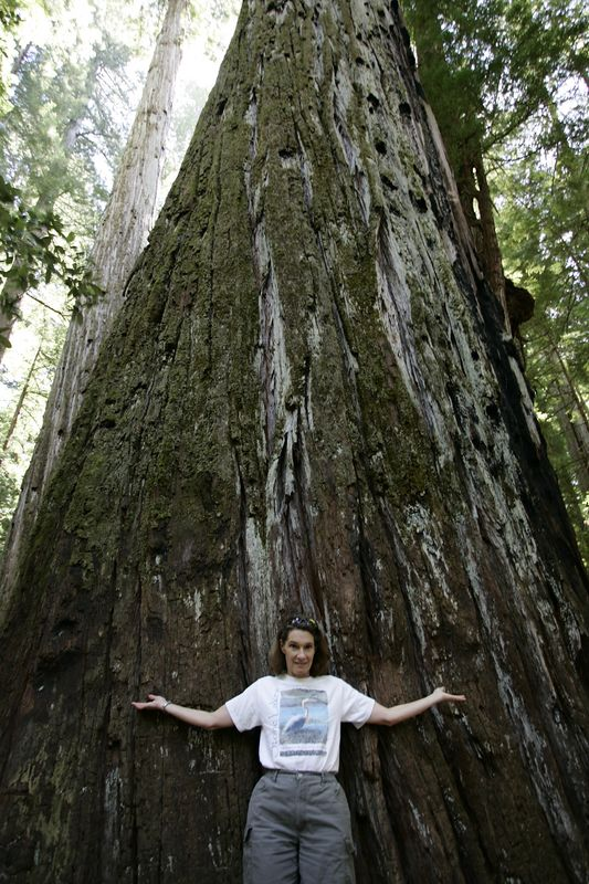 "Anita Scuri in front of ""Giant"" coastal redwood at Bull Creek, part of Calif state <br /> Giant Tree <br /> Circumference: 53 feet <br /> Diameter: 17 feet <br /> Height: 363 feet <br /> Average crown spread: 62 feet <br /> Designated ""Champion Coast Redwood"" in 1991.redwoods park in Avenue of the Giants Bull Creek, California State Park"