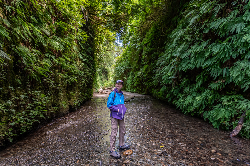 Fern Canyon. The canyon's walls are coated in Western maidenhair fern (Adiantum aleuticum). Prairie Creek Redwoods State Park, California.