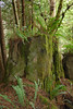 Dead or cut down redwoods become the habitat for other plants such as ferns
