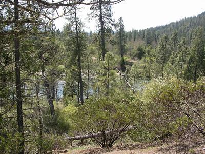 Redwood Trip