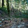 Redwoods_122211_Kondrath_0189