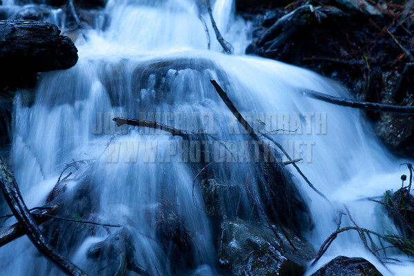 Redwoods_122111_Kondrath_0094