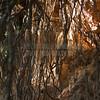 Redwoods_122211_Kondrath_0198
