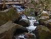 Hedge Creek