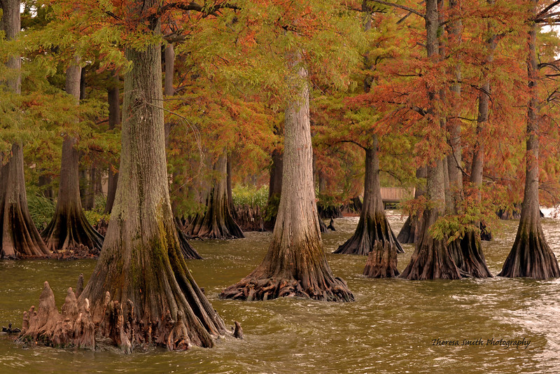 Fall at Reelfoot Lake, TN