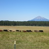 Mt. McLoughlin, the third volcano of my trip. Last eruption: about 30,000 years ago.