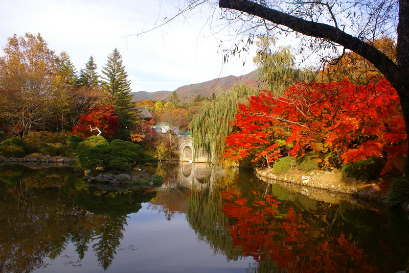 Spectacular autumn tints on the approach to the Bulguksa Temple.