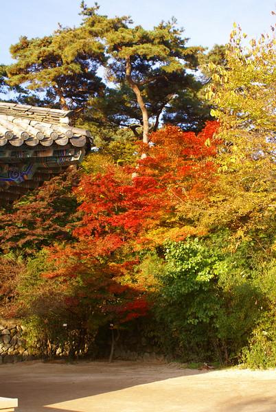 Spectacular autumn colours at the Bulguksa Buddhist Temple