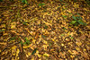 Leaf Litter in Dry Forest