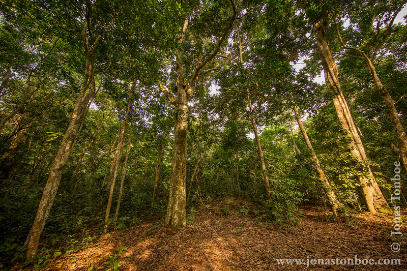 Dry Forest Canopy