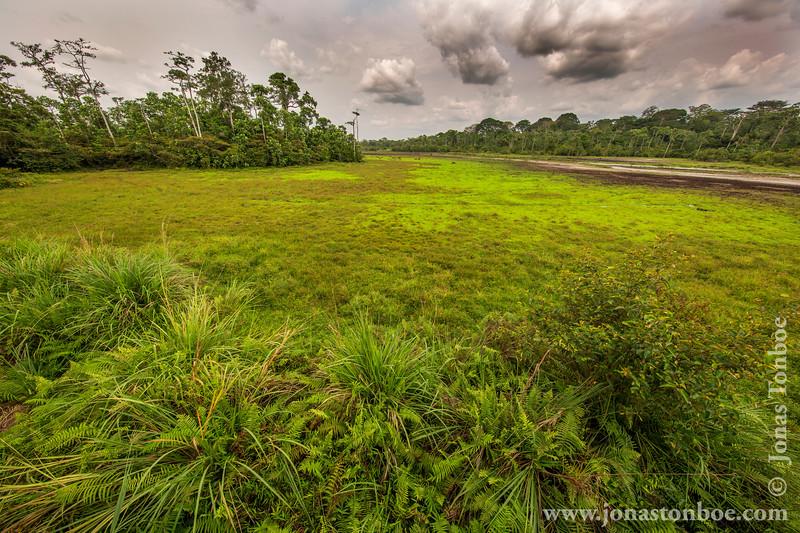 Lango Bai