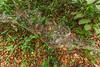 Communal Spider Web
