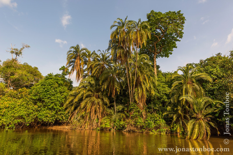 Lekoli River