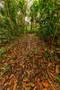 Trail Through Rainforest