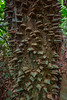 Thorny Tree Trunk