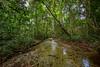 Rainforest Stream