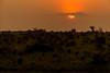 Sunset Over the Savanna