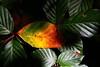 SPA-Autumn colors-IMG_0883