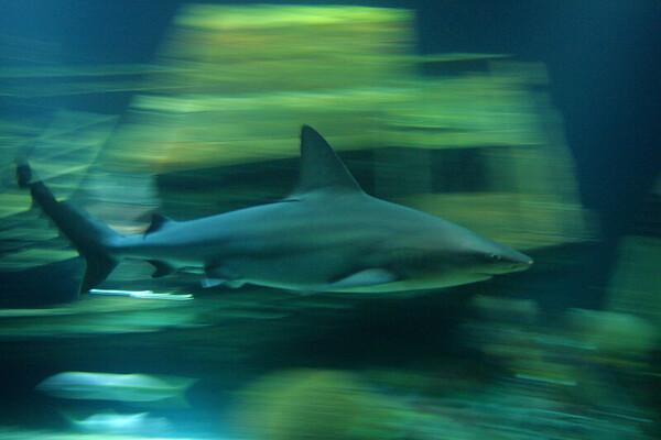 MEX- Shark-IMG_7668