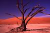 NAMIBIA- Dead tree at Sossusvlei, Namib-Naukuluft NP- Nov 2000