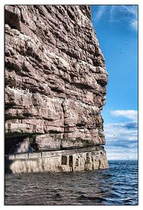 Nesting birds line the sea wall