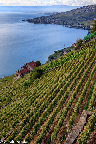 This vineyard was established by monks in the thirteenth century.  The stone walls were transported rock by rock from the other side of Lake Geneva to give stability to the hillside.