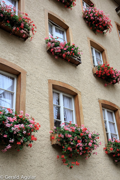 Flowered Window Dressing