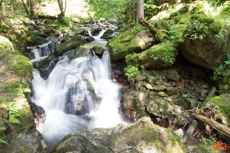 A mountain stream on a path through the Black Forest.