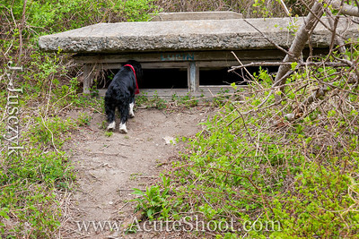 Lacie checking out the old bunker. May 2013