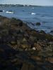 Scene along the Cliff Walk, Newport