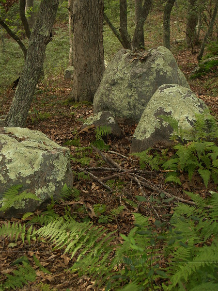Captivating boulders and ferns at Kettle Pond State Park