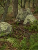 Captivating boulders and ferns at Kettle Pond State Park
