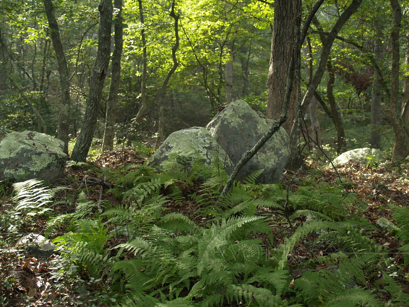 Boulders and ferns in Kettle Pond State Park