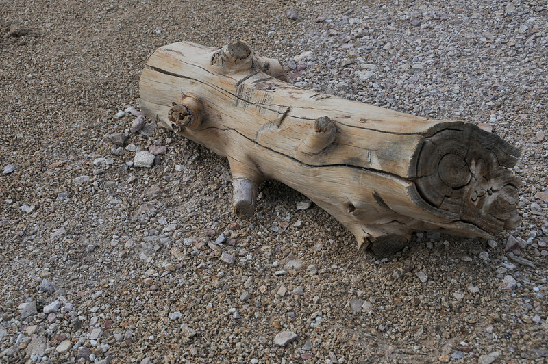 A piece of wood in Rhyolite, NV