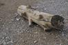 A piece of wood in Rhyolite, NV
