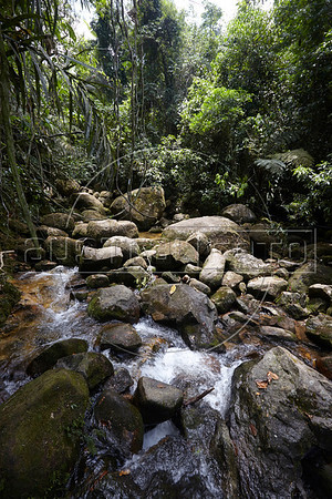 A view of one of the many roadside waterfalls along one of Brazils most beautiful roads, the Rio Santos highway, at approximately kilometer marker 15 in São Paulo state. (Douglas Engle/Australfoto)