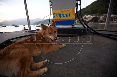 A dog named Beethoven on the ferry pier in Mangaratiba, Rio state, Brazil, just off the Rio-Santos highway. The 500 plus kilometer road runs along the Atlantic Ocean, passing through, near and around dozens of beaches, waterfalls, mountains and forest. It is arguably of of Brazil's most beautiful roads.  (Australfoto/Douglas Engle)