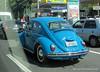 Beautiful Bug!