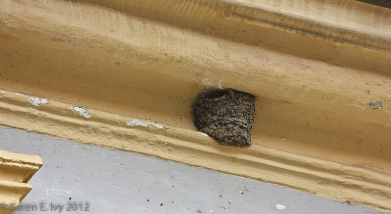 Somebody's nest under the abbey eaves
