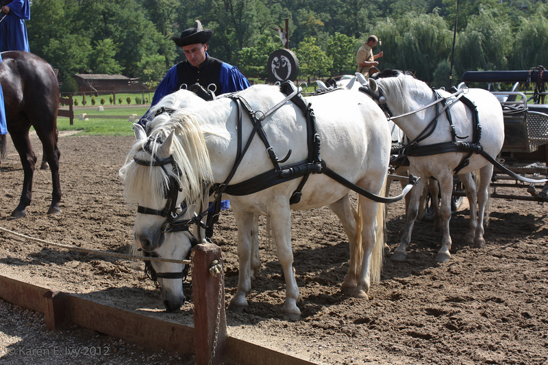 Team of ponies, getting acquainted