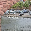 Swans beneath the bridge, Miltenberg