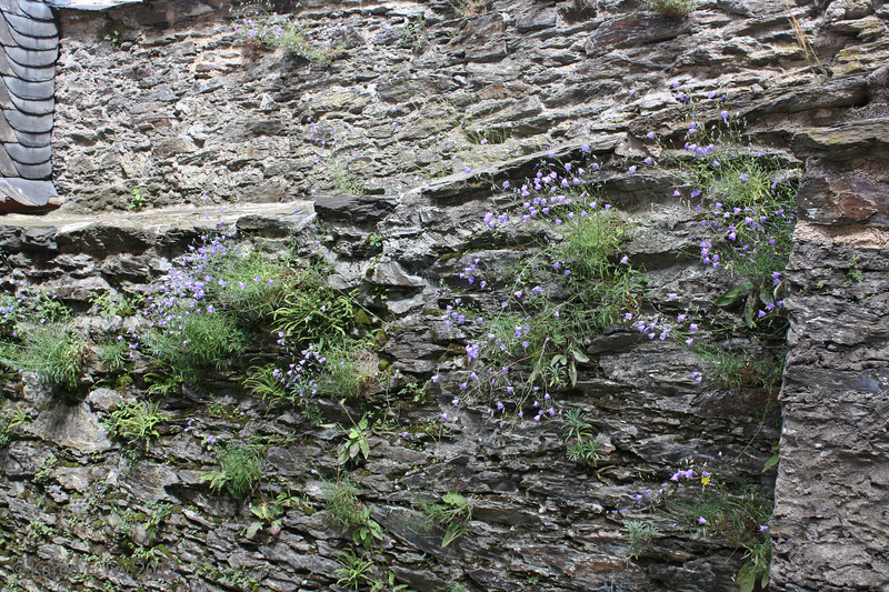 Wildflowers growing in the wall