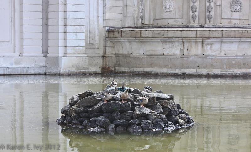 Ducks in the Neptune Fountain