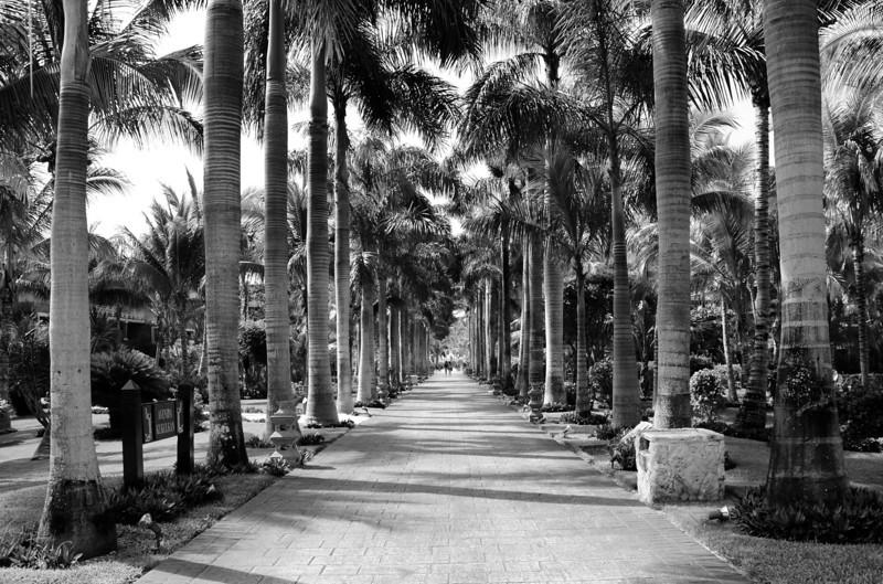 Barcelo Maya Caribe - Puerto Aventuras, Mexico