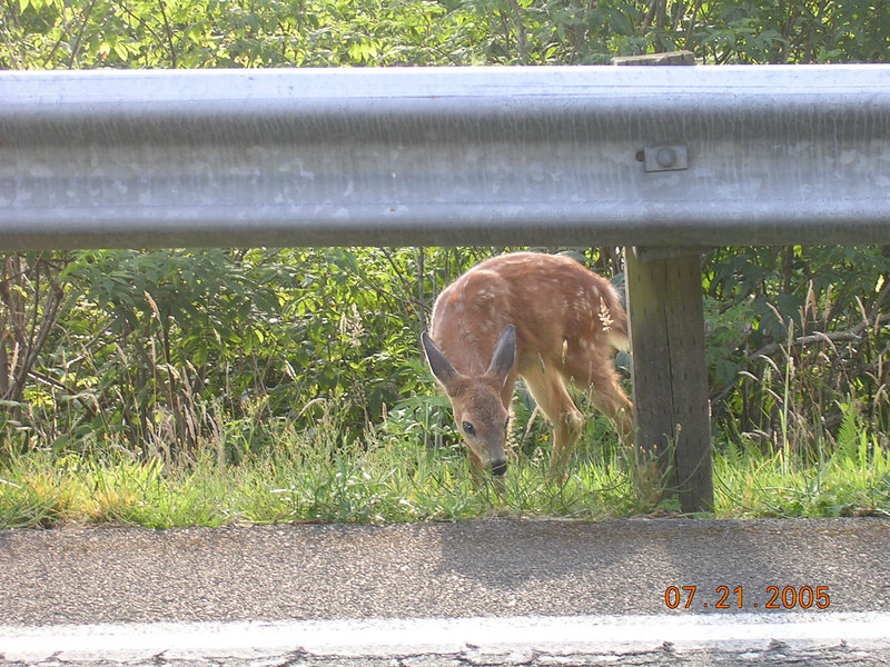 ...And Small Deer.