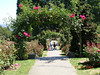 <h2>International Rose Test Garden</h2> So after getting lost several times I finally made it here.  The was a wonderful aroama in the air when I walked down the stairs.  There are so many wonderfull roses here that i can only give you my top 5, but i have more pictures if you want to see the rest.